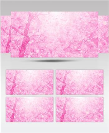 唯美樱花花瓣动态背景视频