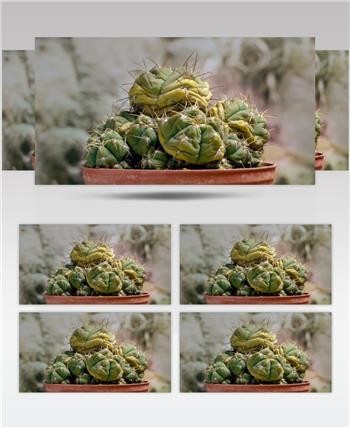 0708-植物快速生长6 15-植物快速生长-1
