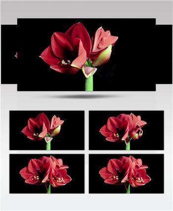 0645-花开放25-自然美景-植物类