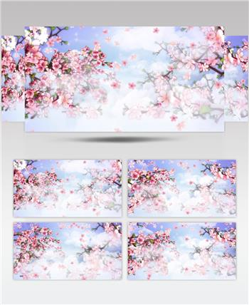 套唯美桃花林 樱花瓣飘落J075桃花盛开