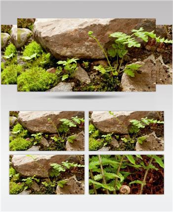 0705-植物快速生长3(蕨类) 15-植物快速生长-1