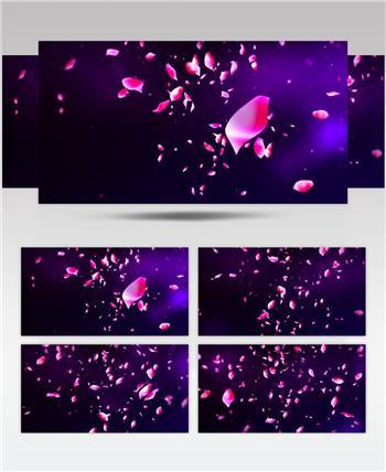 花瓣飘落唯美背景视频素材