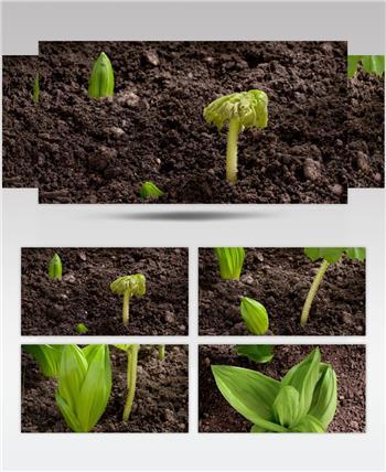 0666-破土而出 15-植物快速生长-1
