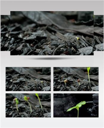 0670-树芽快速生长3 15-植物快速生长-1
