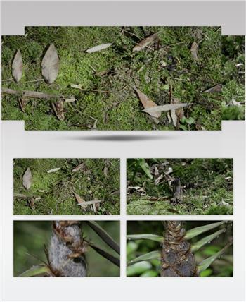 0711-竹笋快速生长1 15-植物快速生长-1