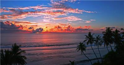 日落夕阳下的大海海岸棕榈树